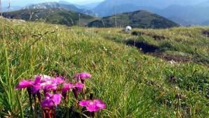 Hochschwab Blumenwiese