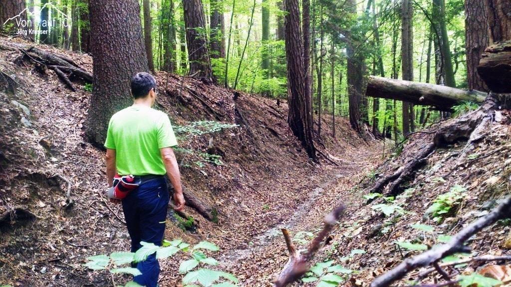 Der Wald um den Schöckl- Heiler und Ruhebringer.