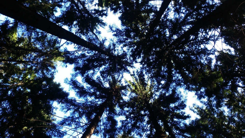 Der Wald, das Leben