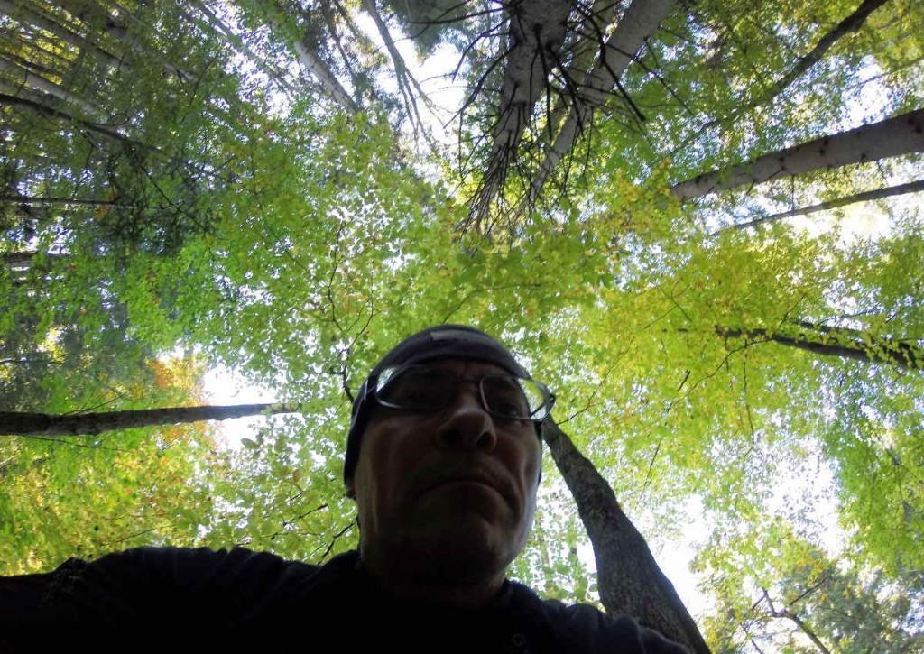Im Wald Heilung suchen