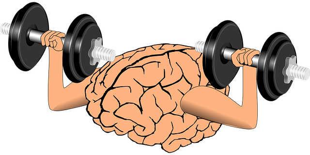 Gehirn Muskel
