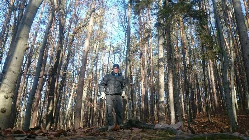 Im Wald gehen