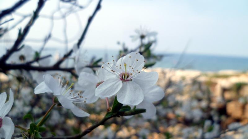 Blüte am Meer