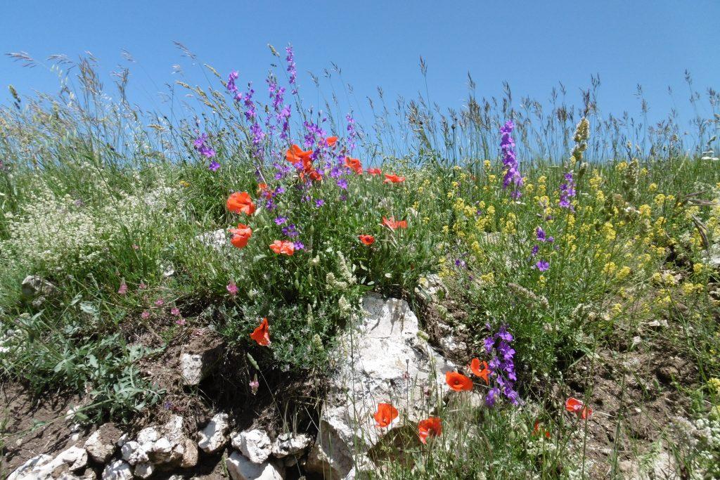 Blumen in allen Farben