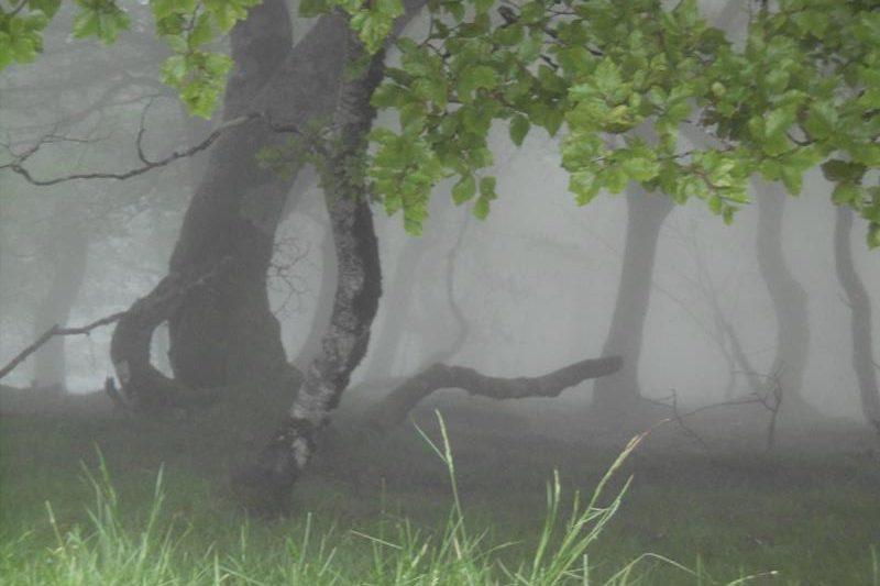 Gespenstischer Wald