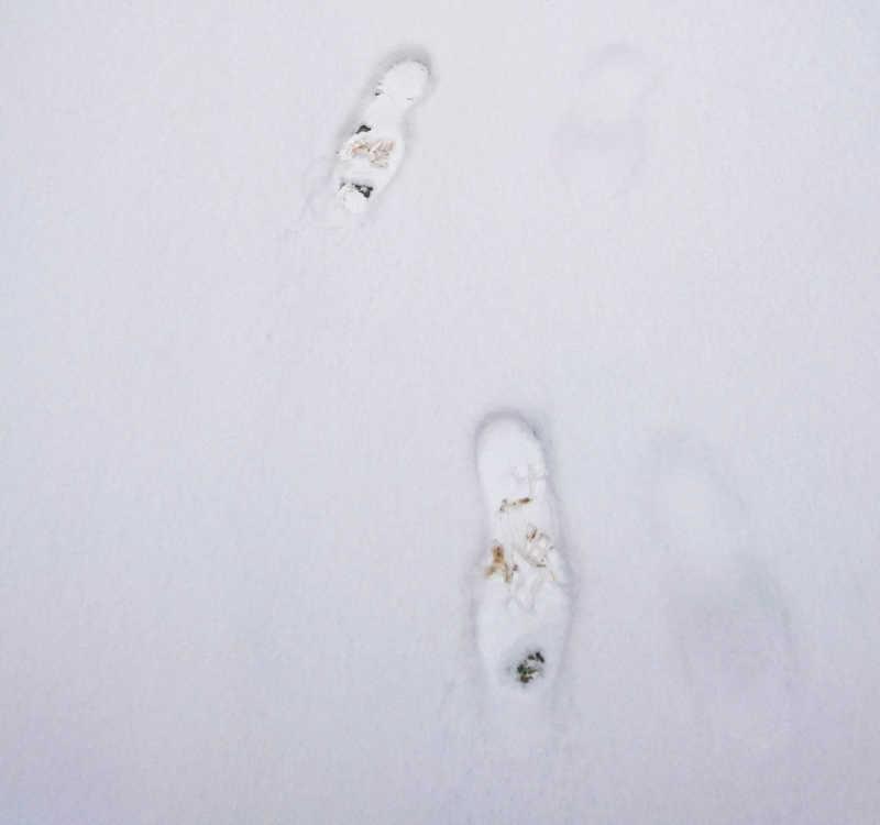 Gehen im Schnee