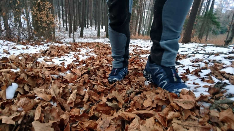 Sensomotorik, Fitness im Wald