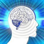 Gehirn und denken