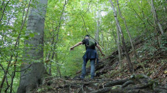 Neuorientierung im Wald