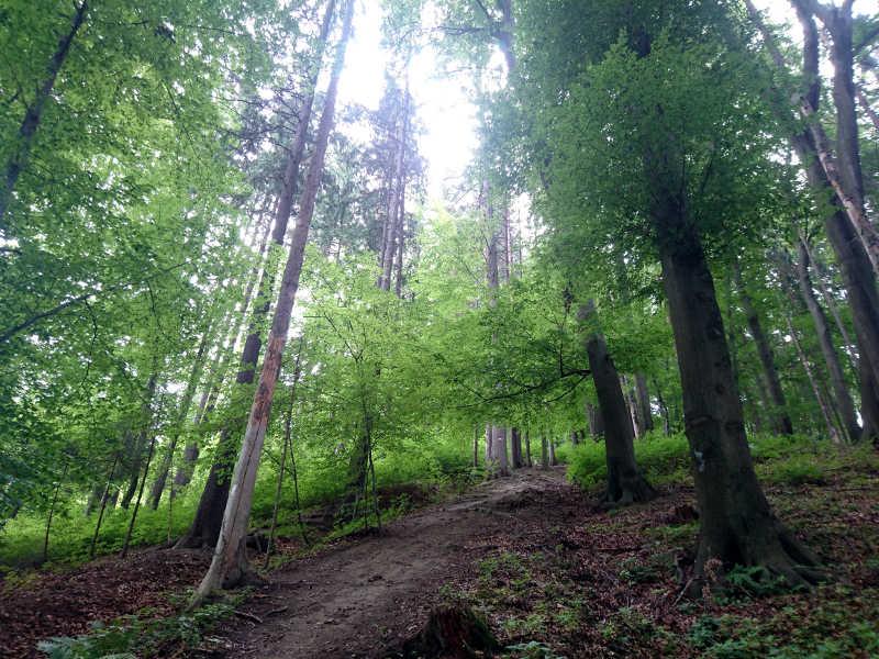 Positive Reize im Wald