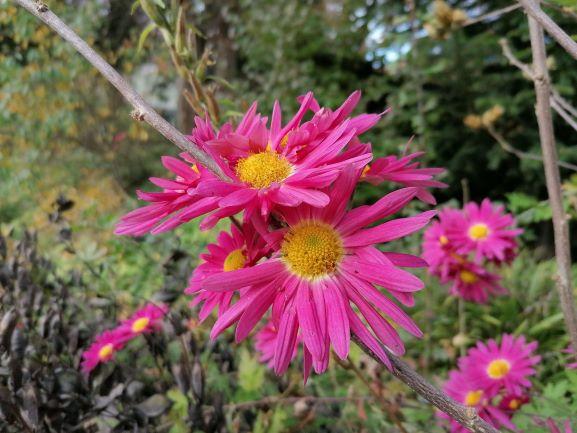 Die Blume braucht keine Ausgangssperre