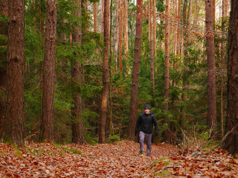 Im Wald beim Lockdown