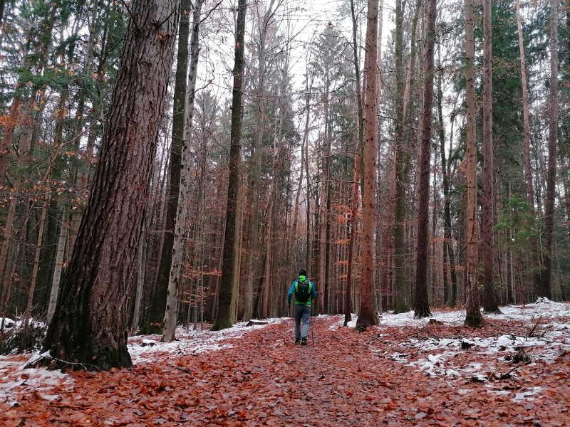 Durch den Wald, am  Papst-Franziskus-Pilgerweg