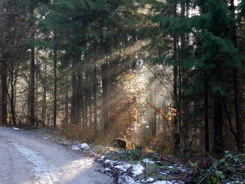 Reha-Therapie in der Natur