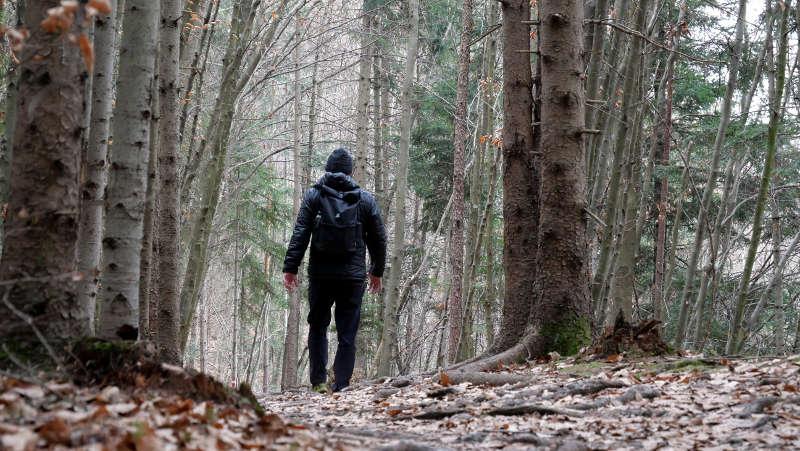 Traumaverarbeitung im Wald