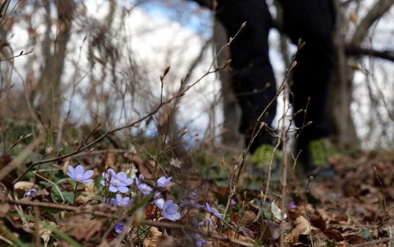 Traumaverarbeitung in der Natur
