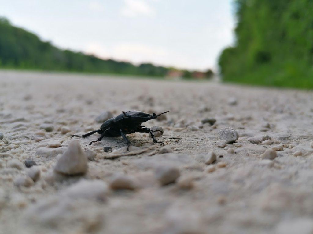 Unterwegs zum nördlichsten Punkt das Krafttier Käfer